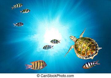 Grüne Schildkröten schwimmen