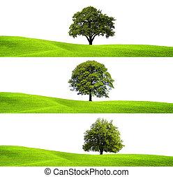 Grüne Umwelt und Baum