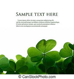 Grüner Kleeblatt grenzt an Raum für Text.