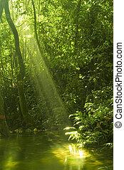 Grüner Wald mit Wasserspiegel