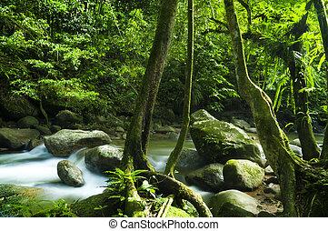 Grüner Wald und Bach