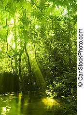 Grüner Wald und Bach.