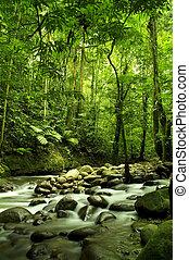 Grüner Wald und Fluss.