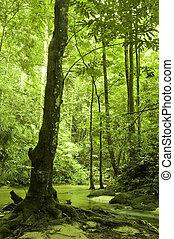 Grüner Wald und Fluss