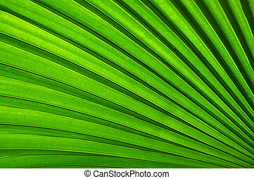 Grünes Blatt.