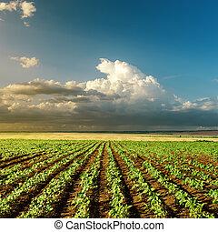 Grünfeld der Landwirtschaft bei Sonnenuntergang