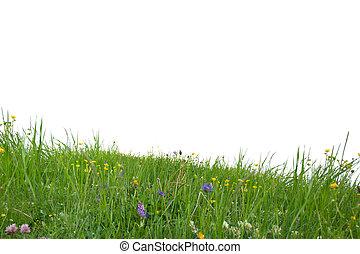 Gras isoliert.