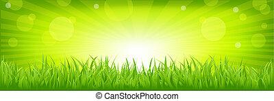 Gras mit grünem Hintergrund
