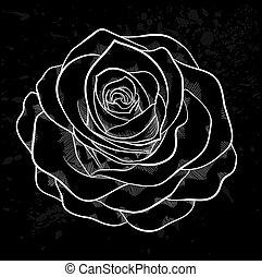 graue , grobdarstellung, rose, flecke, hintergrund., schwarz, weißes