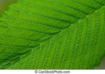 Große grüne Pflanzenblattmakro.