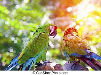 Große tropische Papageien sitzen auf einem Ast.