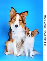 Große und kleine Hunde