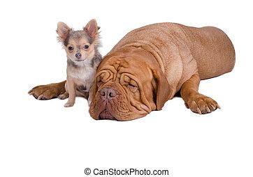 Große und kleine Hunde zusammen