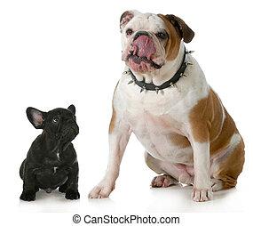 Großer Hund, kleiner Hund