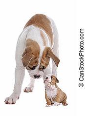 Großer Hund, kleiner Hund.