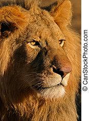 Großer Löwe 11.