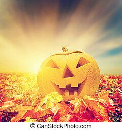 Halloween Kürbis im Herbst, Herbstblätter