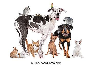 Haustiere vor weißem Hintergrund