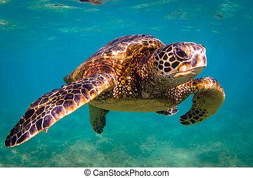 Hawaiianische grüne Meeresschildkröte.