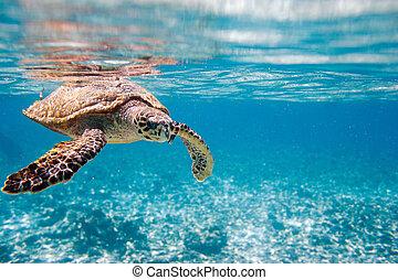 Hawksbill Meeresschildkröte