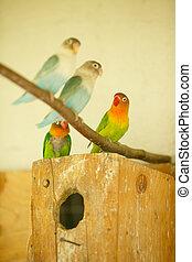 Helle, exotische Papageien sitzen in einem Käfigblock.