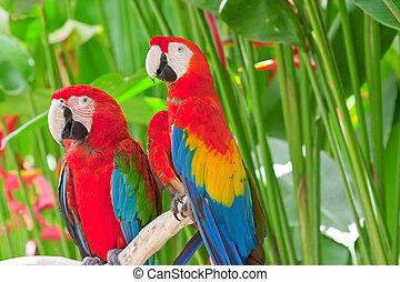 Helle, große tropische Papageien sitzen auf einem Zweig
