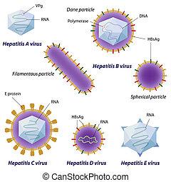 Hepatitis-Viren vergleichen, eps10