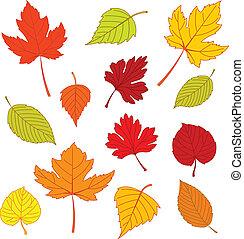 Herbstblätter auf Weiß