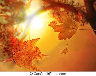 Herbstblatt fallen Herbstblätter