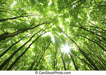 hintergrund, grüne bäume
