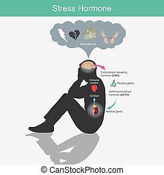 hormone., menschliche , brain., beanspruchen, ausstellung, diagramm, anregung, koerper, antwort