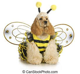 Hund angezogen wie eine Biene.