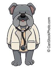 hund, doktor