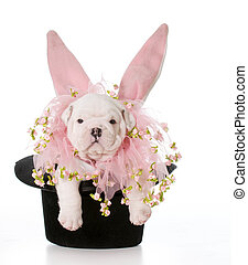 Hund gekleidet wie ein Kaninchen.