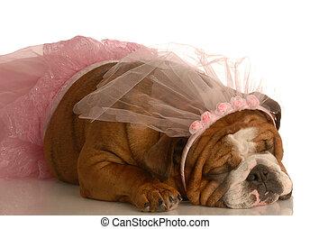 Hund gekleidet wie eine Ballerina.