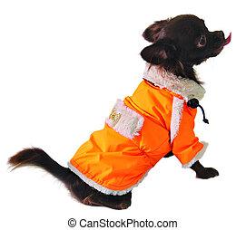 Hund in orange Jacke.