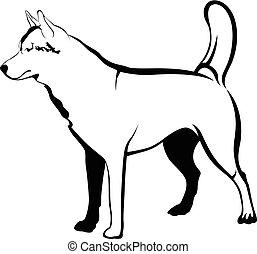 hund, schlittenhunde