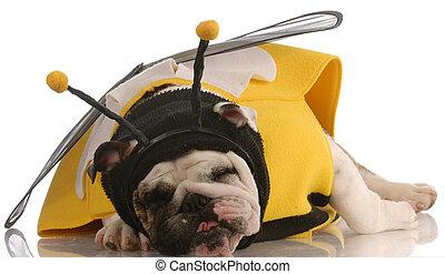 Hund verkleidet als Biene