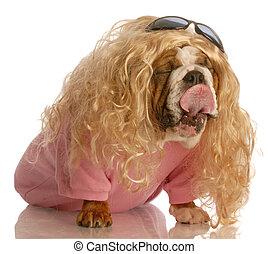 Hund verkleidet als Mädchen