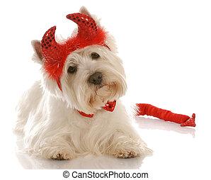 Hund verkleidet als Teufel