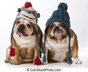 Hunde für den Winter angezogen.