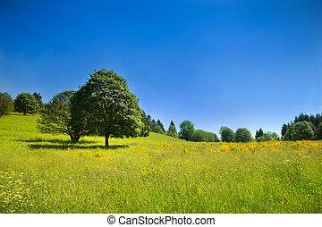 Idyllische Landschaft mit grüner Wiese und tiefem blauen Himmel
