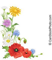 jährlich, wildflowers