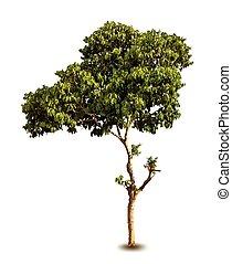 Jahreszeitbaum mit grünen Blättern. Vector isoliert
