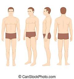 Körperanatomie, Vektor-Mann auf der Rückseite.