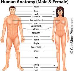 Körperteile.