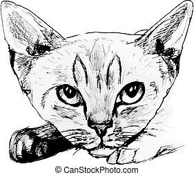 Katzenporträt. Hand gezeichnete Illustration