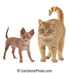 Kleiner Hund und große Katze.
