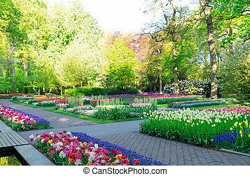 kleingarten, fruehjahr, förmlichkeit