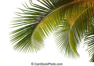 Kokospalmenfranzen